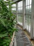 Växthusets gång upp i taket