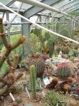 Kaktus-växthuset