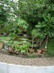 Dammen i växthuset