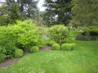 Japansk trädgård Kew Gardens
