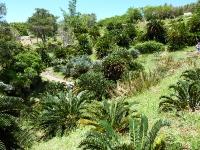 Kirstenbosch Botniska Trädgård Sydafrika 2009
