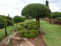 Bulliga träd